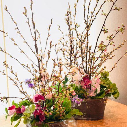 桜とスイートピーのスプリングカラーアレンジメント (生花)